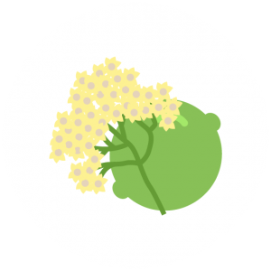 Elderflower Lime